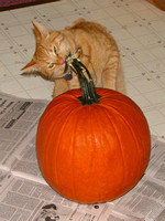 Cat Meets Pumpkin